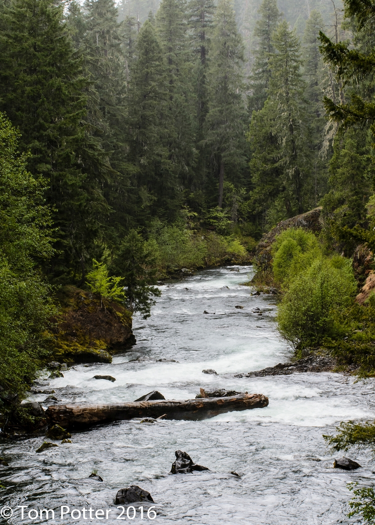 They are like trees planted by streams of water, Psalm 1:3a